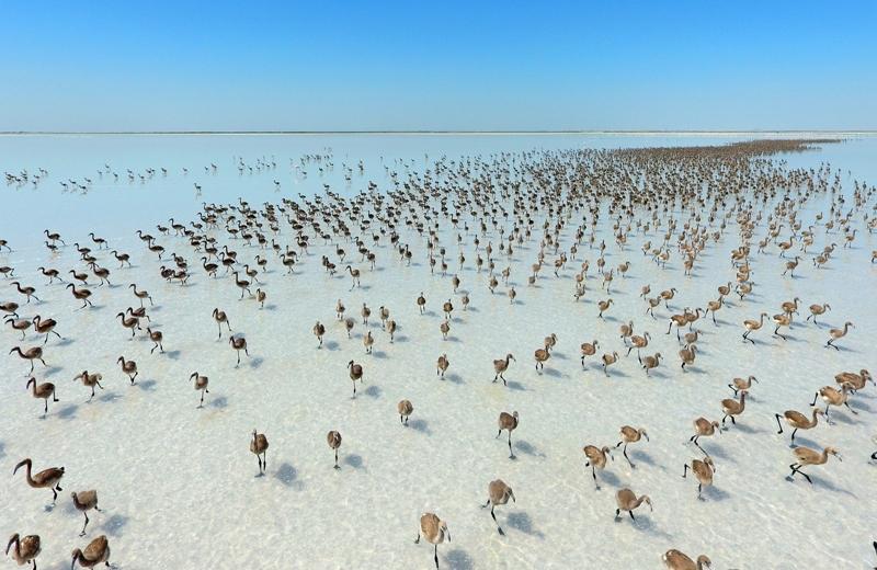 Tuz Gölü flamingolarla bir başka güzel oluyor