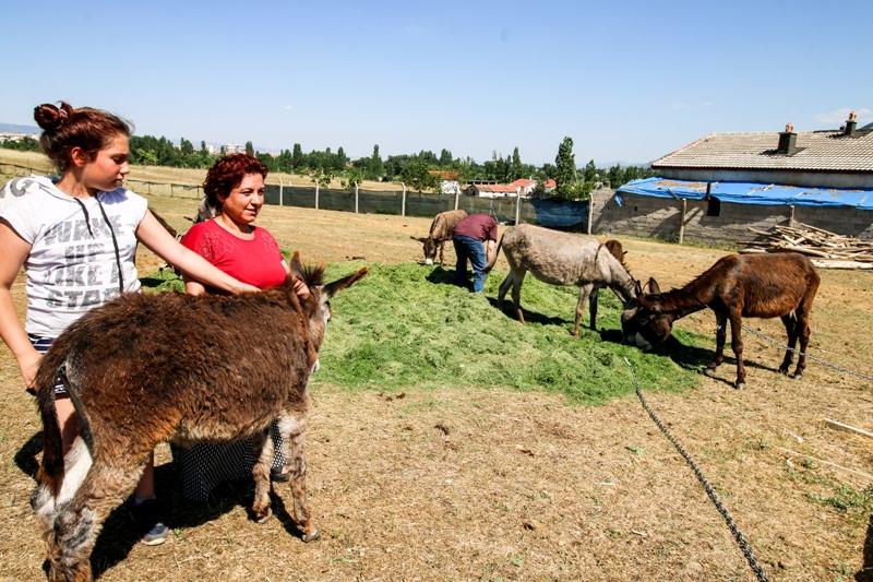 Kanser hastası eşi için çiftlik kurdu