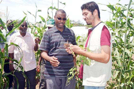 TİKA ve İHH, Somaliye modern tarımı öğretiyor
