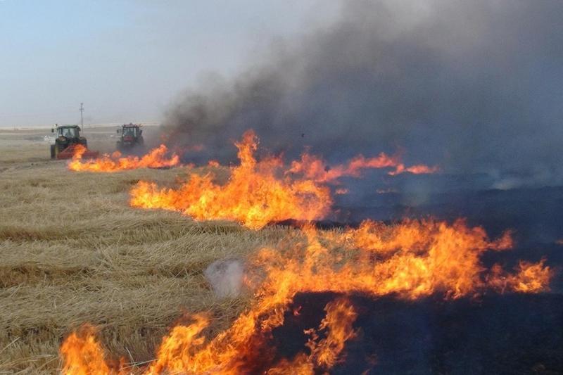 Anız yangını bir doğa katliamıdır