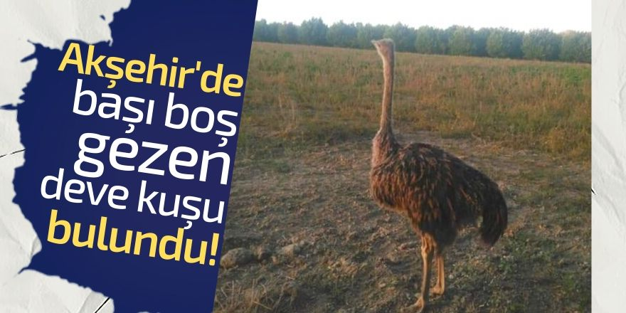 Akşehir'de göl kenarında devekuşu bulundu