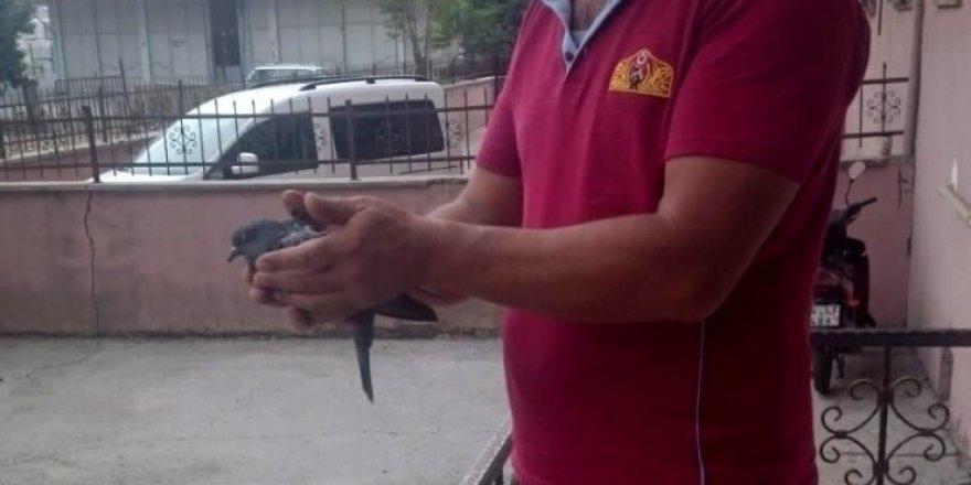 Havalandırma boşluğuna düşen kuş kurtarıldı