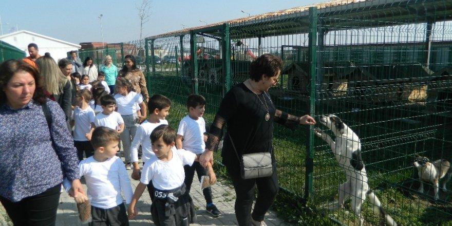 Minik öğrencilerin hayvan sevgisi