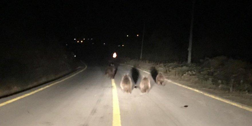 Kocaeli'de aç kalan ayılar yemek ararken araçların önüne indi