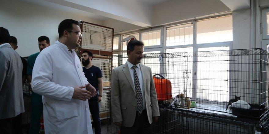 Her ay 30 hayvan, ameliyat edilerek sağlığına kavuşuyor