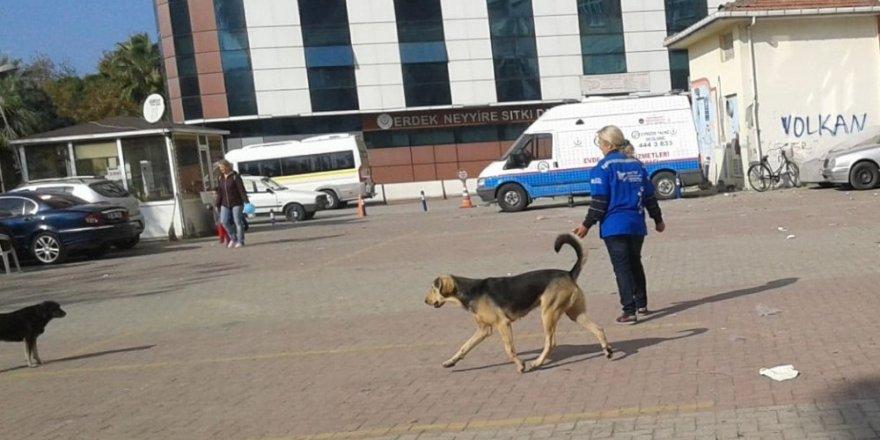 Pompalı tüfekle vurulan köpek sahibine verildi