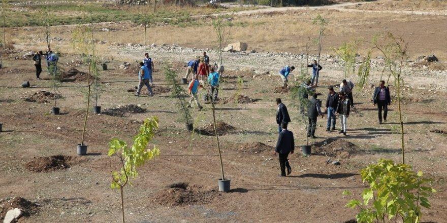 Haliliye Belediyesinden Milli Ağaçlandırma Günü'ne destek