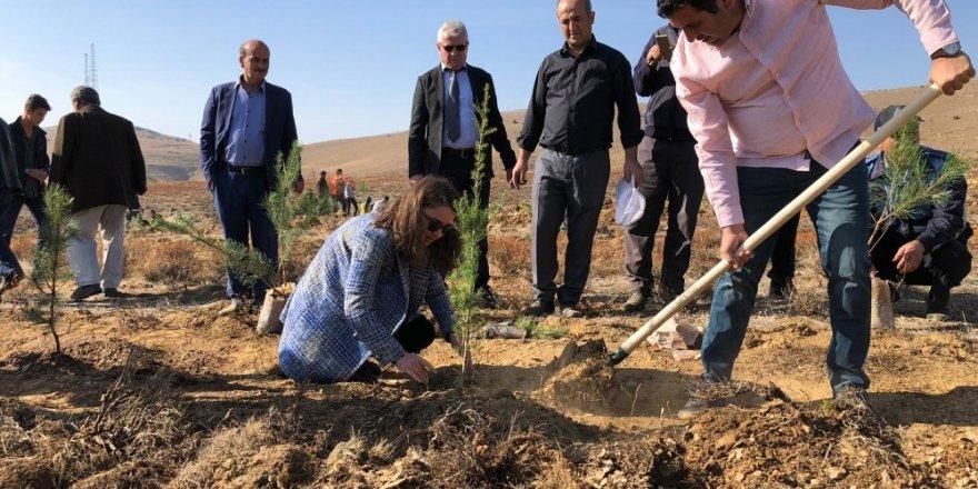 Hüyük'ten ağaçlandırma seferberliğine 20 bin fidan desteği