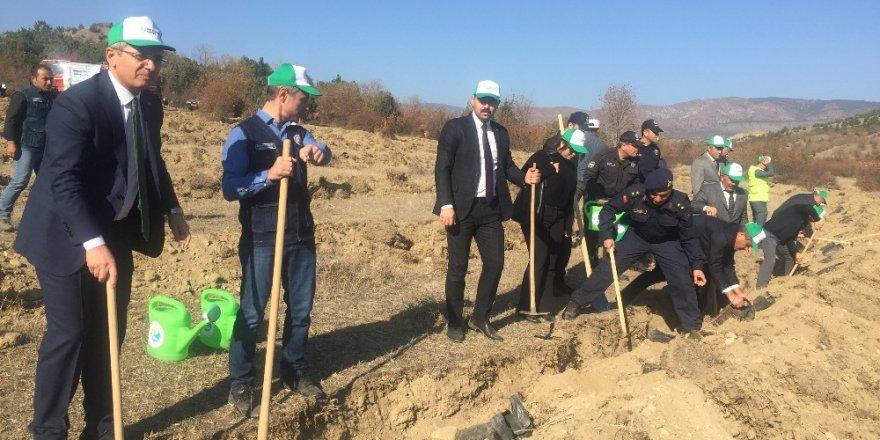 Tosya'da 10bin fidan toprakla buluştu