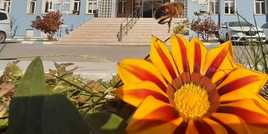 Afyonkarahisar'da sonbahar ve yaz görüntüleri bir arada