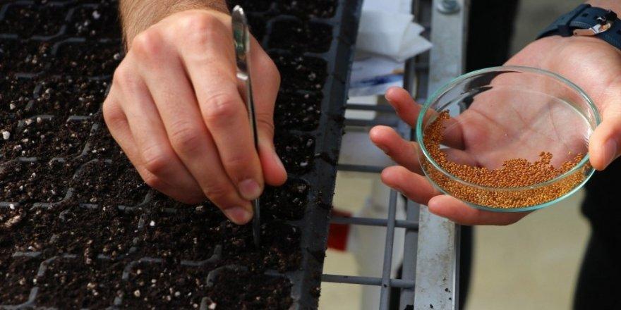 Cımbızla 8 bin süs bitkisi tohumu toprakla buluşturuldu