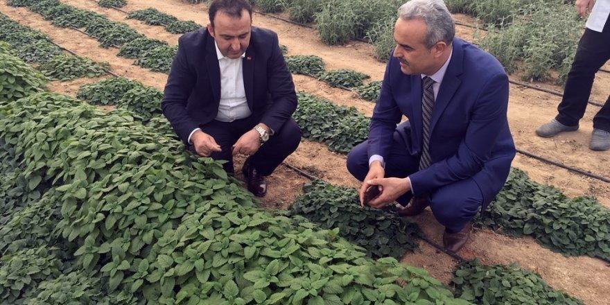 Kırklareli Açık Cezaevinde aromatik-tıbbi bitki yetiştirilecek