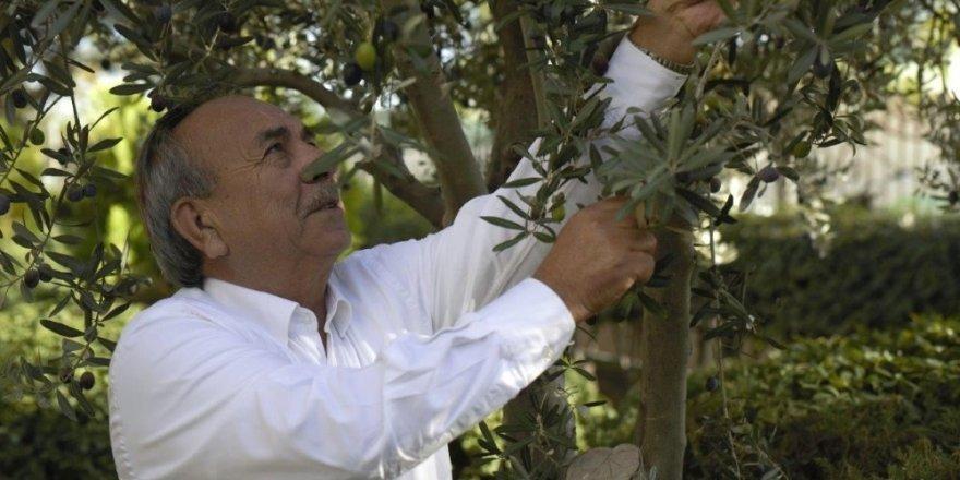 Tariş Zeytinyağı Birliği zeytinyağının fiyatını açıkladı