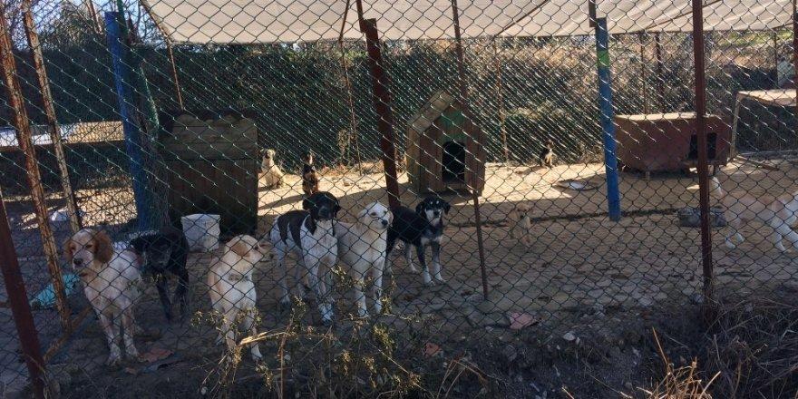 Lapseki'de sokak hayvanlarına aşı yapıldı