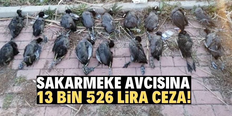 Konya'da kaçak avcıya suçüstü!