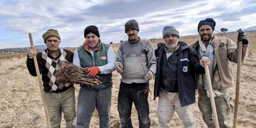 Karaman'da dağ köylerine 50 bin üzüm fidanı dağıtıldı
