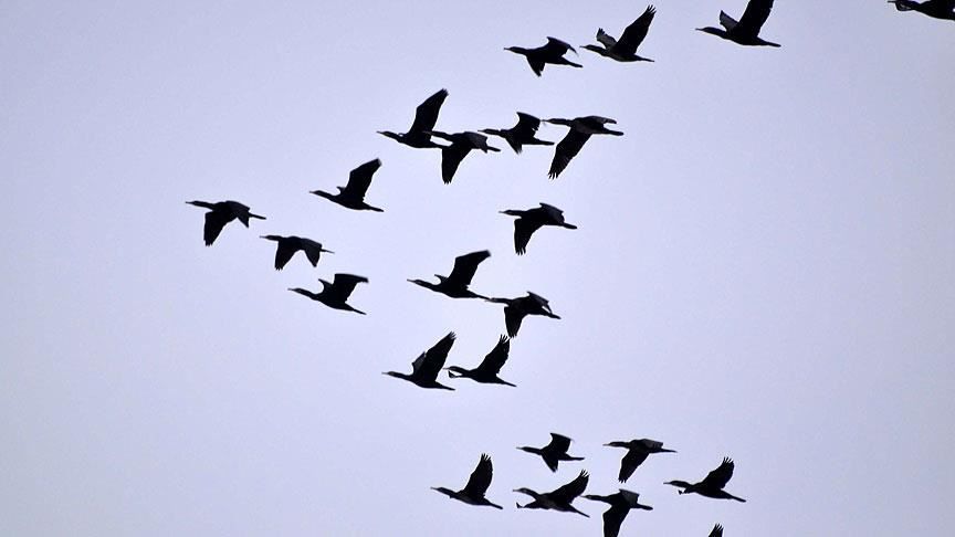 Ölü kuşlarda batı nil virüsü mü var?