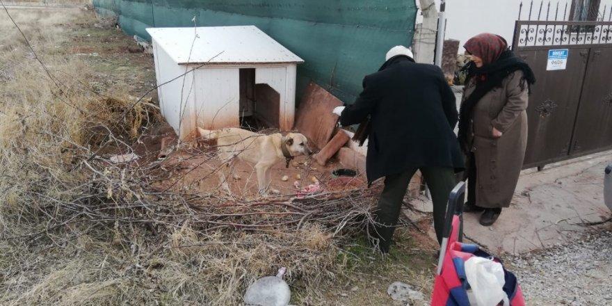 Aksaray'da 20 yıldır pazar arabasıyla hayvanlara yiyecek taşıyor