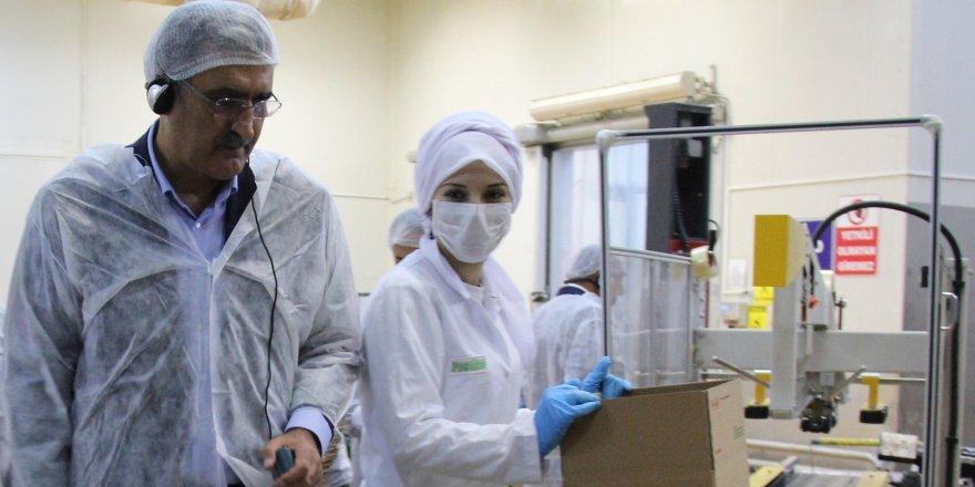 Konya Şeker patates üretimini 10 yılda 3'e katladı