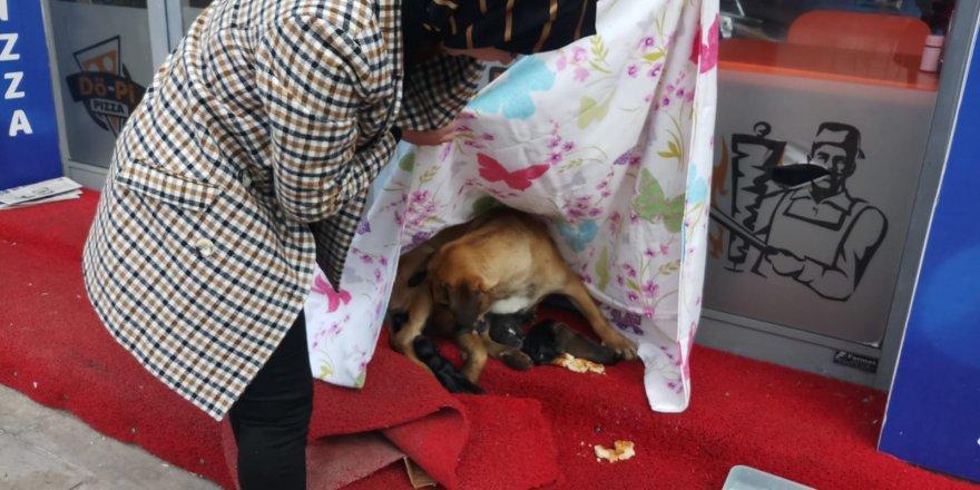 Paspasa yavrulayan  köpeğe sahip çıktılar