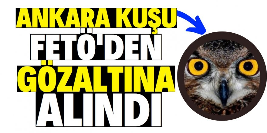 Ankara Kuşu'na FETÖ'den gözaltı