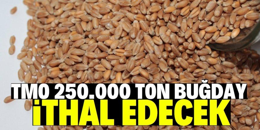 TMO, 250 bin ton buğday ithal edecek!