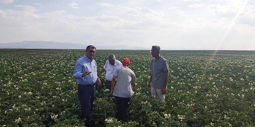 Konya Şeker, yerli patates tohumu üretti