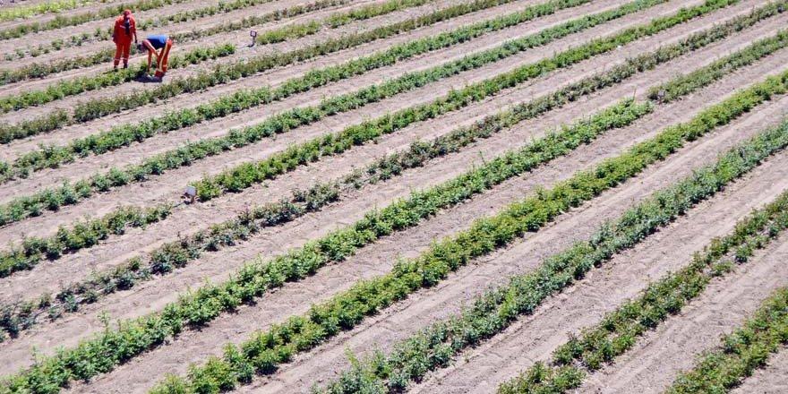 Tuzlukçu Parkı ve Fidanlığı Üretime Katkı Sağlıyor