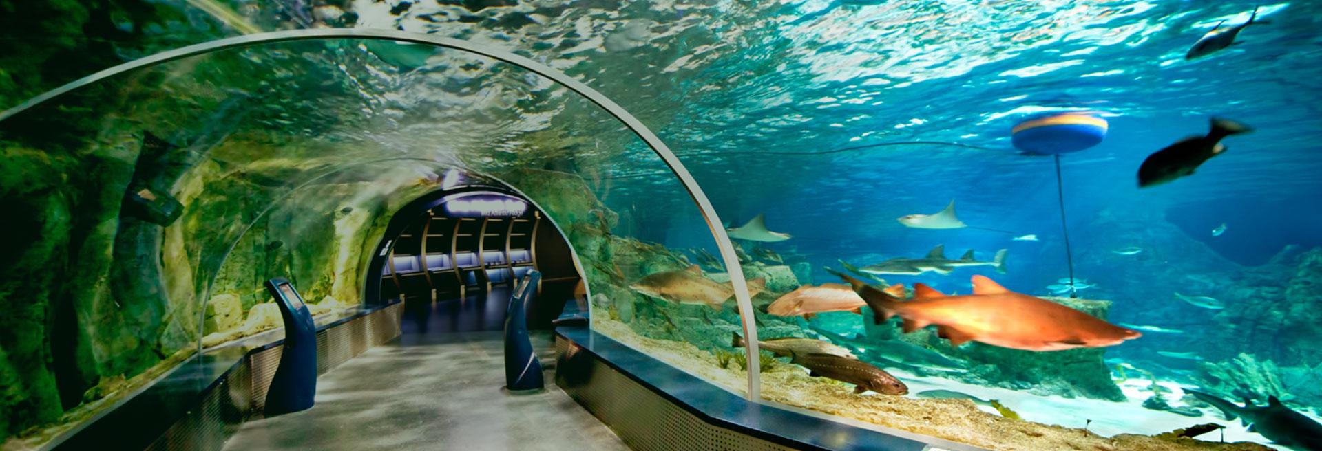 Dünyanın En Büyük Tematik Akvaryumu İstanbul'da