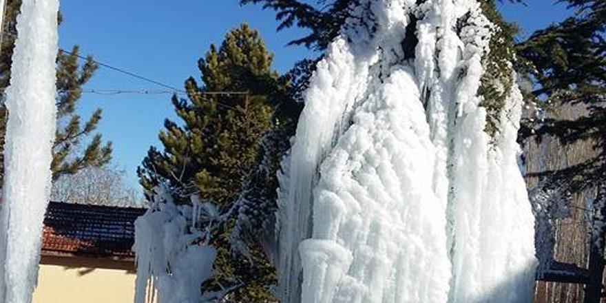 Beyşehir'de ağaçlar buz tuttu