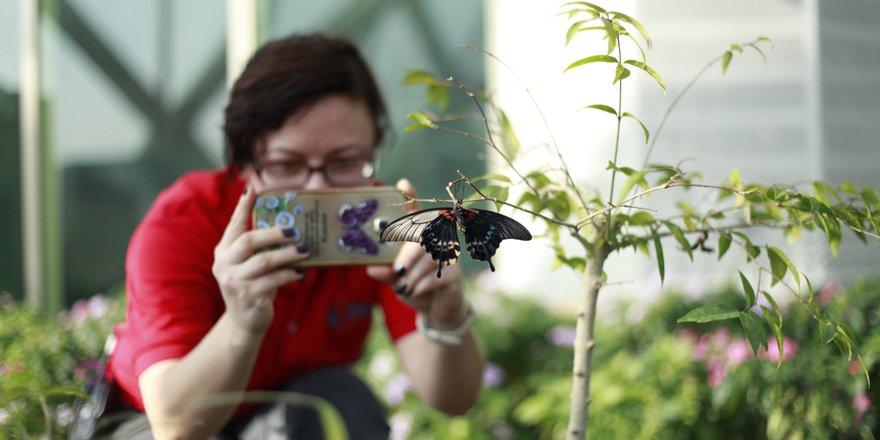 Bu kelebek çift cinsiyetli