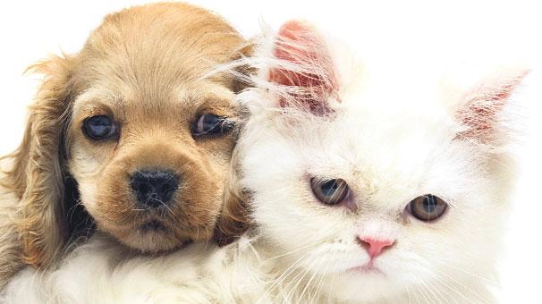En Uygun Köpek Ve Kedi Mamaları