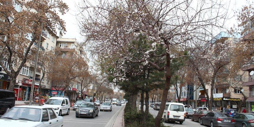 Bahar etkisini gösteriyor, çiçekler açıyor