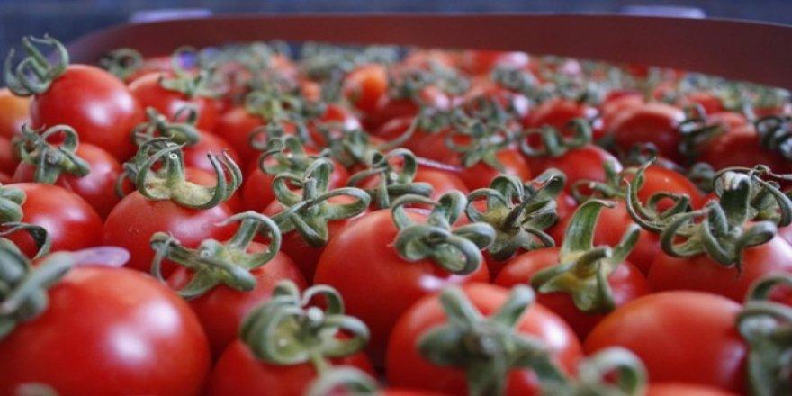 Domates ihracatı yüzde 40 arttı