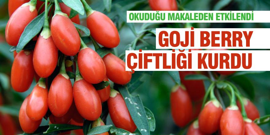 Makaleden etkilenip goji berry çiftliği kurdu