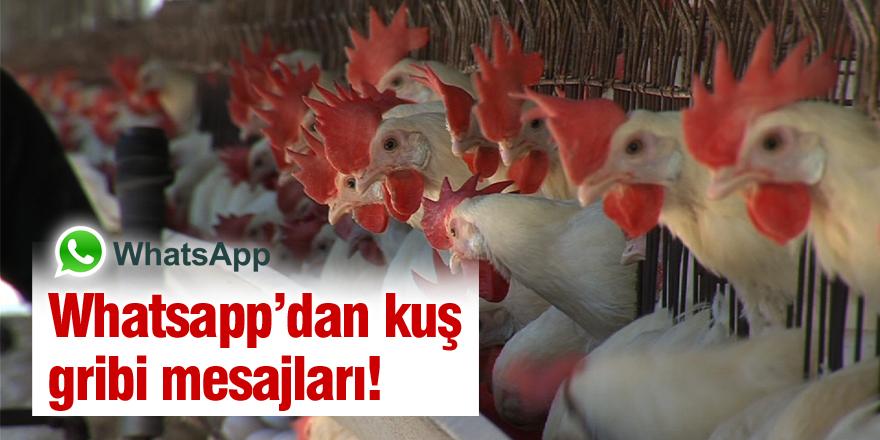 WhatsApp üzerinden kuş gribi karalaması