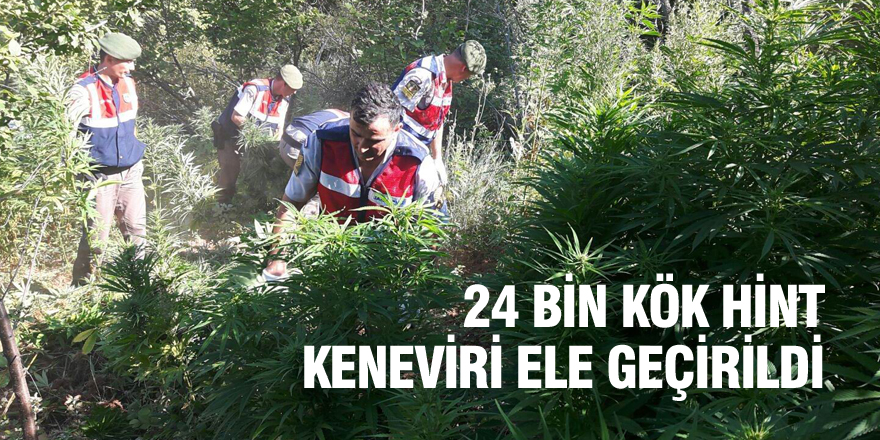 Konya'da 24 bin kök Hint keneviri ele geçirildi