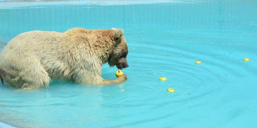 Sıcaktan bunalan hayvanlara buzlu meyve