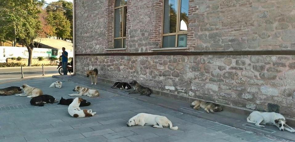 Başıboş köpekler korkutuyor!
