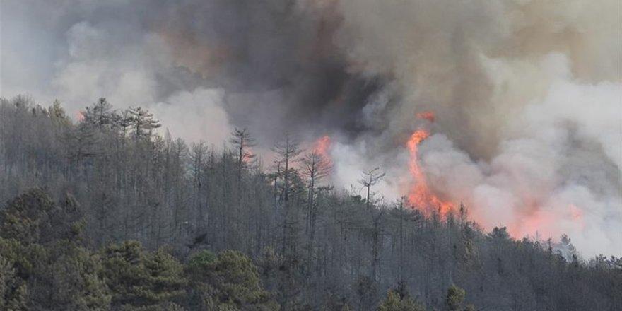 Kütahya'daki orman yangını yeniden başladı