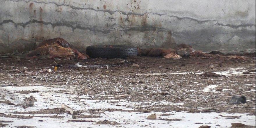 Konya'da at kesildiği iddiası
