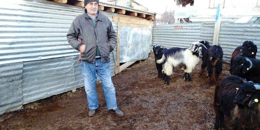 Ahırlı'da sürüden ayrılan keçileri kurtlar telef etti