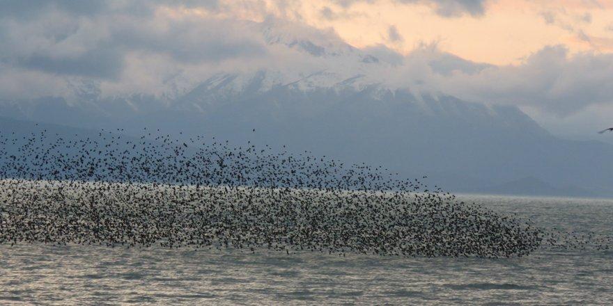Beyşehir Gölü Milli Parkı'nda sığırcık sürülerinin görsel şöleni