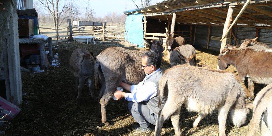 Eşek çiftliğinde süt talebine yetişemiyor