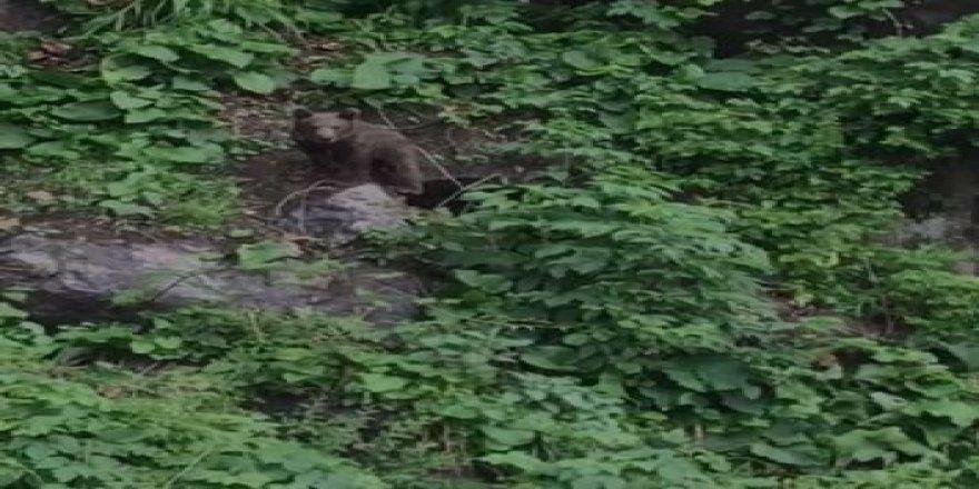 Çalılıklarda mahsur kalan yavru ayı kurtarıldı
