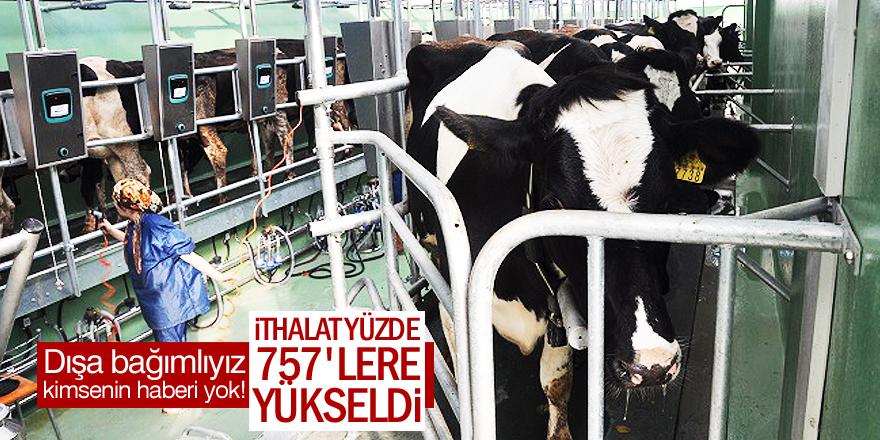 Hayvancılık bitiyor!