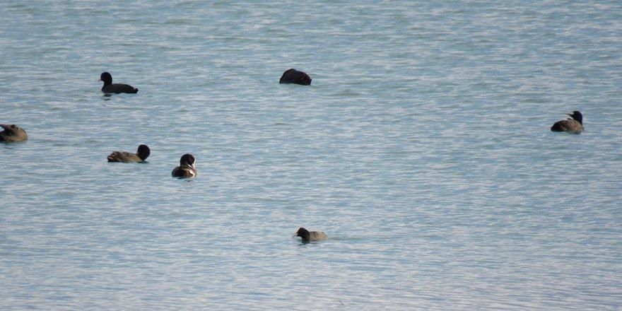 Beyşehir Gölü kıyıları yavru kuşlarla renklendi