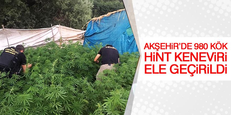Akşehir'de 980 kök Hint keneviri ele geçirildi