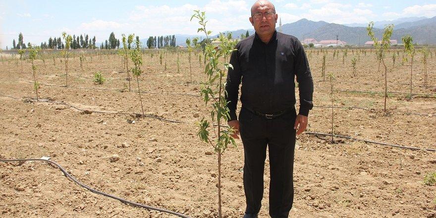 Öğrenciler kıraç araziyi meyve bahçesine dönüştürdü