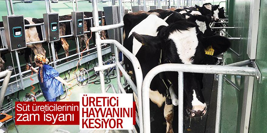 Süt üreticisi 'pes' etti!